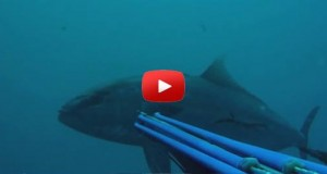 Spearfishing el melli video