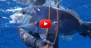 Ciconat spearfishing grouper snapper video