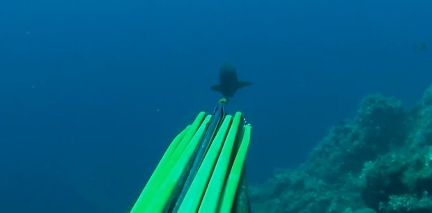 spearfishing Comb Grouper - Ciconat