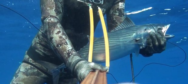 spearfishing mediterranean Skipjack tuna -palamita - Ciconat