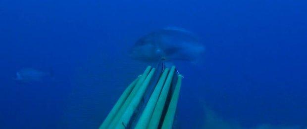 spearfishing mediterranean Snapper - Ciconat