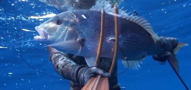 ascension island spearfishing 7 catches of 7 different species by ciconat spearfishing zone