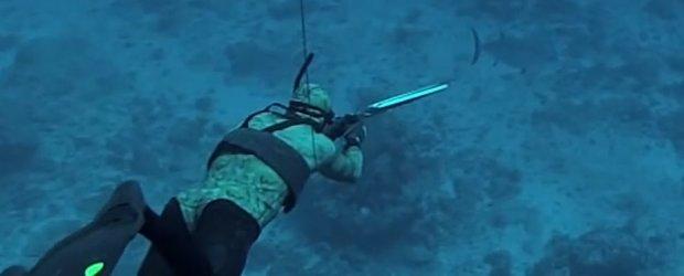 dog tooth tuna spearfishing