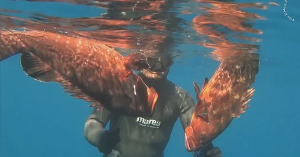 spearfishing dusky groupers