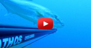 spearfishing Amberjack close range stalking