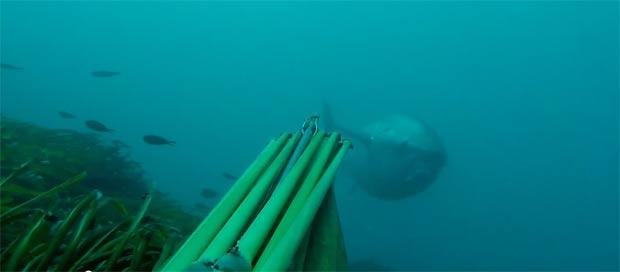 spearfishing-bluefin-tuna104kg002