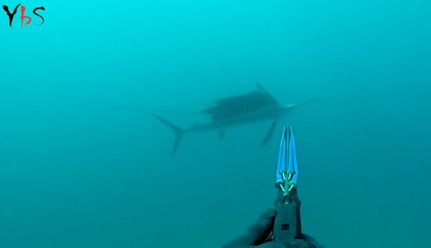 m_spearfishing-sailfish-secondshot