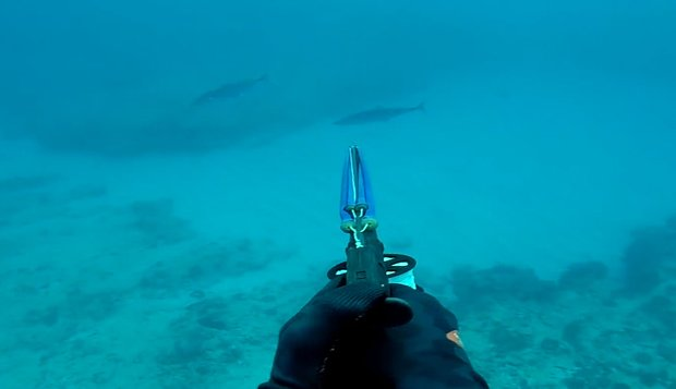 m_spearfishing-spanish-mackerel