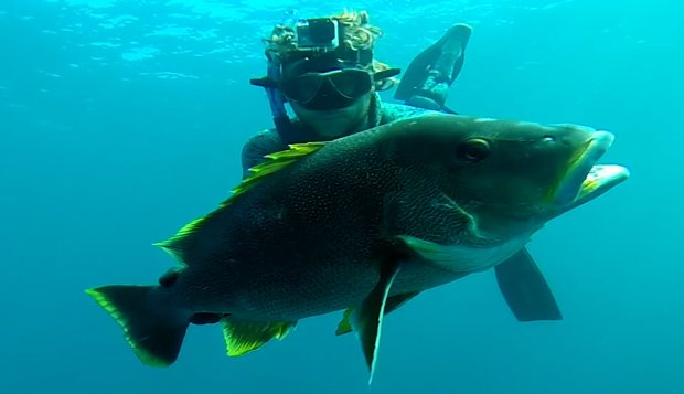 m_spearfishing-youngbloods