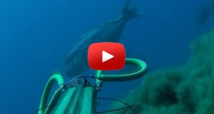 Ciconat top 10 spearfishing shot 2014