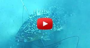 spearfishing blooper