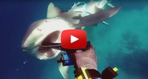 Crazy Bullshark Attacks Spearo