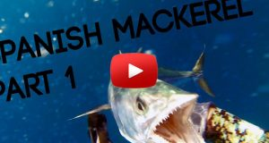spanish mackerel hunting - part 1
