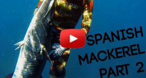 spanish mackerel hunting part 02