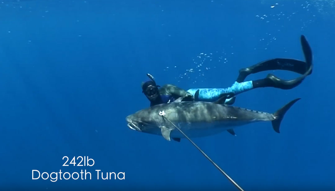 Spearfishing 242lbs Dogtooth tuna - mission Africa